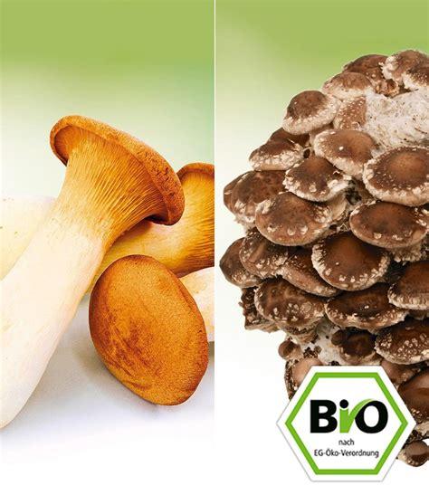 Natürliches Mittel Gegen Pilze Im Garten by Bio Garten Pilz Duo Shiitake Kr 228 Uterseitling Baldur