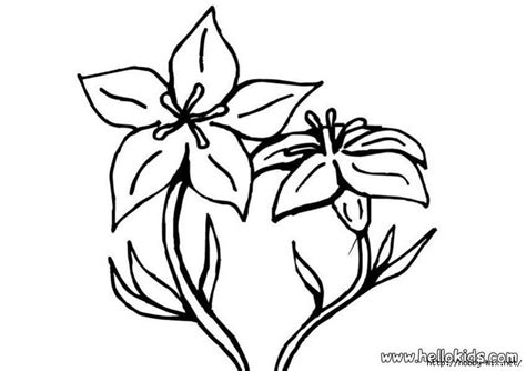 coloring pictures of lily flowers free water lily flower coloring pages
