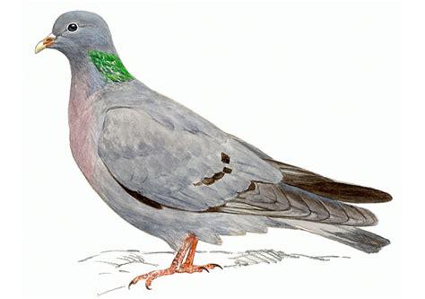 imagenes de palomas ok paloma recipes dishmaps