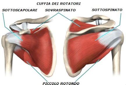 dolore interno scapola sinistra spalla stefano lovati
