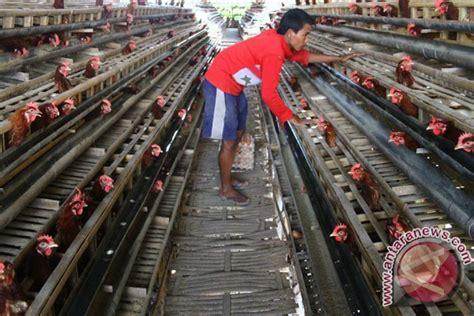 Bibit Ayam Petelur Di Jawa Timur 70 persen peternakan ayam petelur di pulau jawa dikuasai