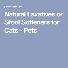 Safe Stool Softeners For Dogs by Laxatives Or Stool Softeners For Cats