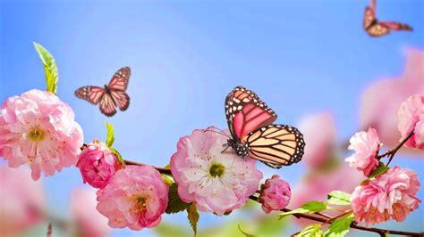 imagenes de mariposas bonitas y fondos de pantalla de divertidas im 225 genes para descargar gratis para fondo de