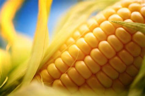 alimenti non digeriti nelle feci cosa provoca macchie bianche nella cacca itmedbook