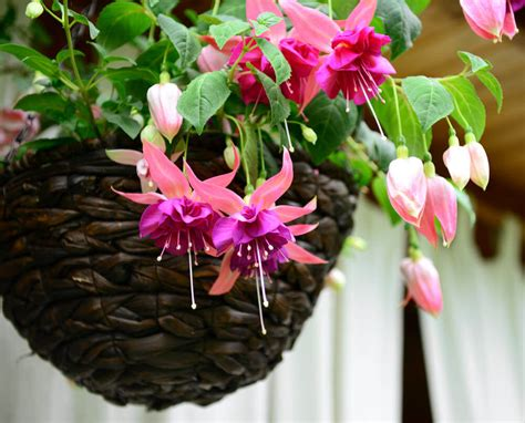 Hanging Flower Basket 70 hanging flower planter ideas photos and top 10