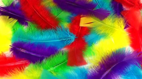 colorful feather learn colors with colorful feathers children s