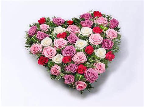 imagenes rosas de todos los colores coraz 243 n rosas de colores
