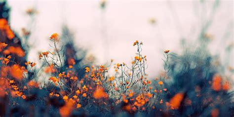 pinterest mac wallpaper cabecera oto 241 o primavera floral favourite covers pinterest