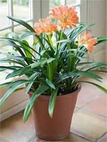 10 best indoor plants