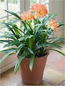 best inside plants 10 best indoor plants