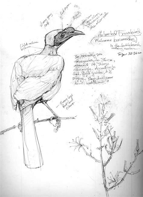 Australia Sketchbook – Drawing The Motmot