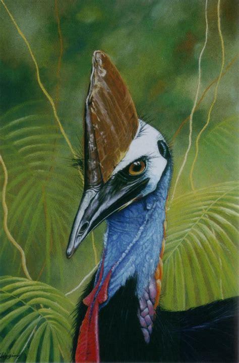 world�s toughest endangered bird a cassowary natures