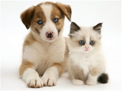 kittens and puppies pictures of puppies and kittens together pets world