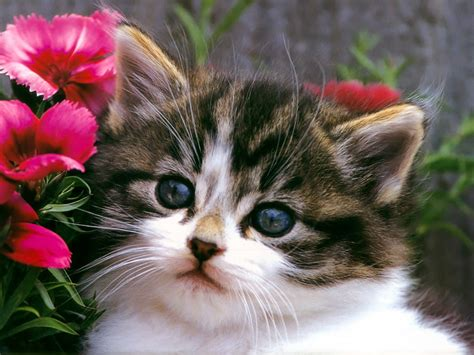 cat wallpaper download hd cute cat hd wallpapers free download only green blog