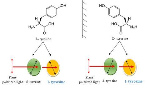 difference between l and light difference between l tyrosine and tyrosine l tyrosine vs