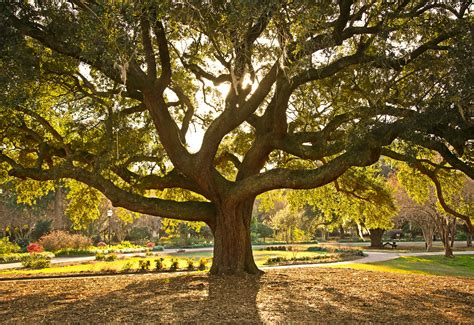 what do trees symbolize meaning of trees the symbolism behind 11 common varieties