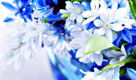 gambar bunga  dijadikan wallpaper gudang wallpaper