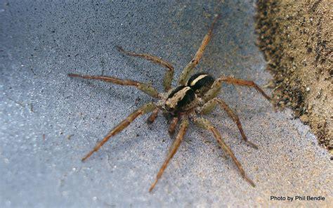 Garden Spider New Zealand T E R R A I N Taranaki Educational Resource Research