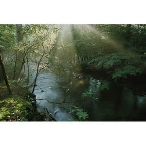 National Geographic Wall Murals National Geographic Forest Stream With Sunbeams Wall Mural