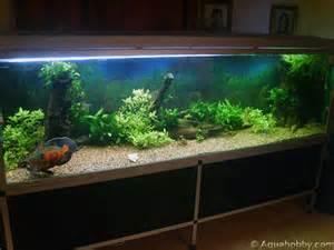Big Fish Tanks Fish Tank of May '09 at The Age of Aquariums   Tropical