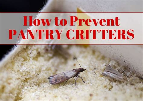 How To Stop Pantry Moths by 17 Best Images About Home Health Safety On