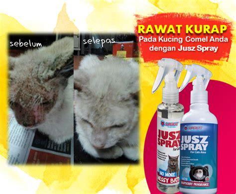 Sho Kutu Untuk Kucing 5 produk wajib untuk kucing kesayangan anda