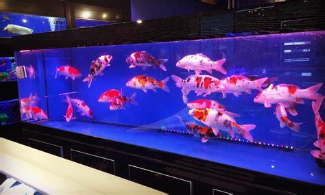 cara membuat filter untuk aquarium kecil cara memelihara ikan koi di aquarium sebagai dekorasi