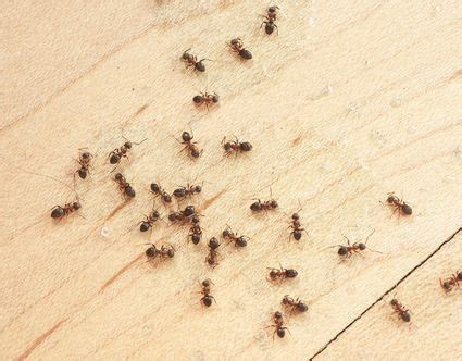 How To Get Rid Of Termites In Kitchen