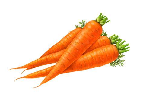 carrot clip carrot clipart clipartion