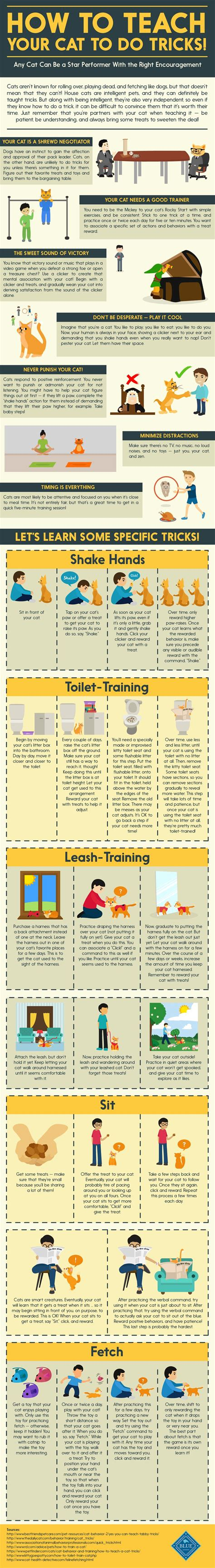 tricks to teach your how to teach your cat to do tricks infographic