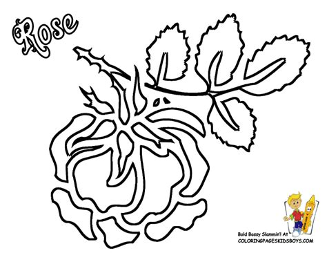 tudor rose coloring page free tudor rose border coloring pages
