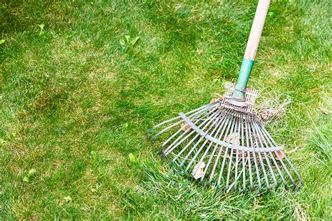 Landscape Rake Leaves Keep Your Yard In Tip Top Shape For Living Outdoors