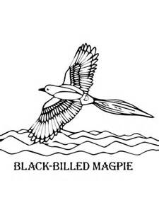 magpie bird coloring page black billed magpie coloring page supercoloring com