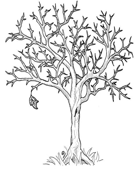 Free Tree Trunk With No Leaves Coloring Pages Fall Tree Coloring Page