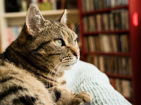 katze uriniert auf sofa hund oder katze was soll ich mir holen sind katzen oder
