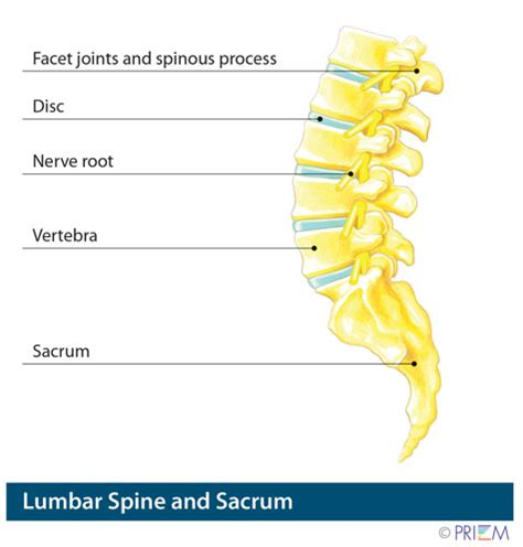 spine l for anatomy library precision spine care tyler texas
