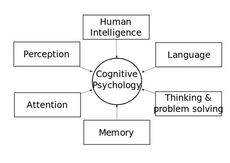 cognitive biography definition file cognitivepsychology svg wikiversity