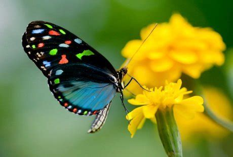Cd Link Kupu Kupu evolusi kupu kupu beastudi indonesia