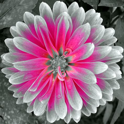color accent black and white nature photography with color accents