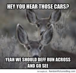 Deer Hunting Memes - 56 best hunting memes images on pinterest hunting stuff