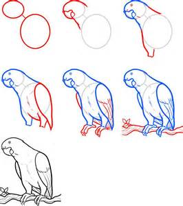 How To Draw Bird How To Draw Parrots