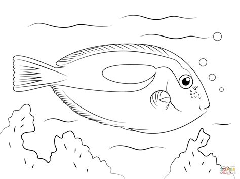 Blue Fish Coloring Pages | blue tang coloring page free printable coloring pages