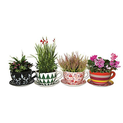 Large Planter Saucers by Tea Cup And Saucer Planter In 4 Designs Large