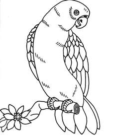 parrot coloring page printable parrot coloring pages coloring me