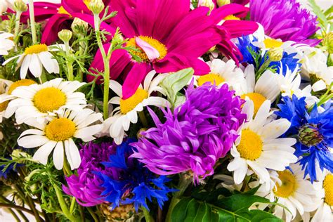 10 most popular valentine s day flowers and its flower