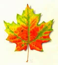 fall leaf colors fall leaf colors somers land trust