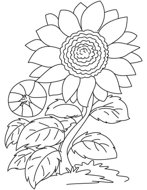 sketsa gambar mewarnai bunga matahari anak tk paud sd