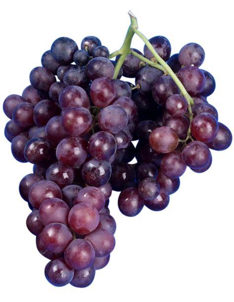 uvas silvestres imagenes moscatel de hamburgo uvas de mesa caracter 237 sticas y