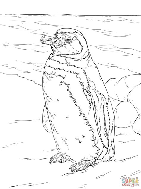 galapagos penguin coloring page realistic magellanic penguin coloring page free