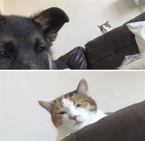 how to a cat and to get along 13 times humans wanted dogs and cats to get along but it didn t go as planned top13
